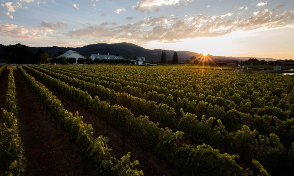 Getting to the Heart of Napa Valley: Spotlight on Nickel & Nickel's Oakville Cabernets